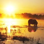sunset with rhino on the river