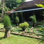 sweet rural Javanese settings