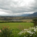 Wine Country, view from Ernie Els' winery