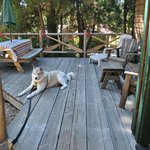 Our dog Timber enjoying front deck at Fisherman's Hideaway