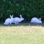 Rabbits in the resort...made children very happy
