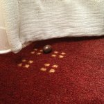 A Chocolate was found on the carpet