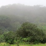 Mist cover at Bhimashankar forest along drive