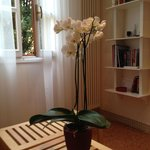 Beautiful living room with live orchid- nice touch.