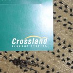 Crossland Economy Studios - Fort Worth - Fossil Creek resmi