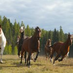 It was really fun photographing the running horses