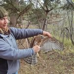 One of the banding station volunteers with a northern goshawk