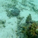 Damaged corals around the house reef