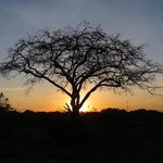 Sunrise at Mbuzi Mawe Tented Camp