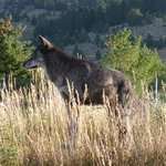 Howlers Inn Bed & Breakfast and Wolf Sanctuary resmi