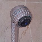 Mold shower head