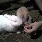 Feeding Rabbit in Rabbit Garden