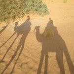 the desert camel trek