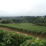 Wine Country Farmの写真