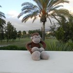Monkey on Tour enjoying the sun