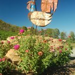 This rooster greets visitors to Watts Roost Vineyard