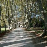 The driveway of Chateau des Alpilles