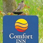 Φωτογραφία: Comfort Inn Yosemite Valley Gateway