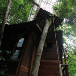 Jackfruit tree house