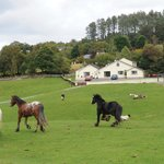 Muckross Riding Stables B&Bの写真