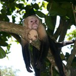Manuel Antonio National Park Sites