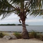Foto de Grassy Key RV Park & Resort