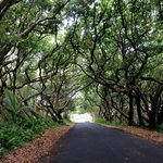 The road to Kalani