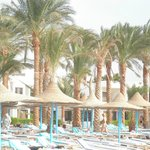 Marlin Inn Beach Resort Foto