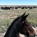 Foto de Burnt Well Guest Ranch Cattle Drive