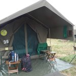 Foto di Serengeti Tented Camp - Ikoma Bush Camp