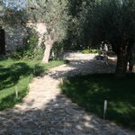 Photo de Gera's Olive Grove
