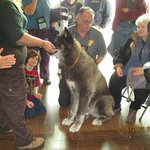 A real wolf! Very domesticated. At the Cape May Autumn Birding Festival What a site he was!