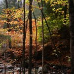 Autumn Splendor at Camp Orenda