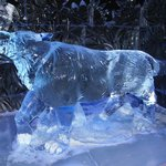 Wolf in Ice