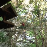 Feed the Rosellas on your own porch