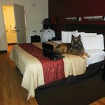 Even my dog enjoyed his stay at the Red Roof Inn!