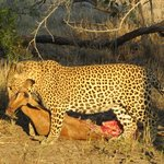 Londolozi Private Game Reserve Foto