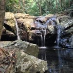 Rose Gums Wilderness Retreat의 사진