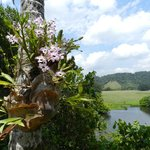 Wild orchids growing on the trees with the stunning view