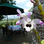 Wild orchids and the deck were breakfast is served
