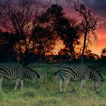 Sabi Sabi Little Bush Camp照片