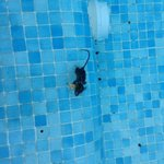Villa 7 dead mouse after pool turned off 3 days before end of holiday..unusable