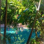 Foto di Palm Cove Tropic Apartments