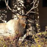 elk who lives on the property