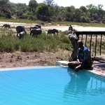 No need for a game drive.  This is a game swim!