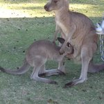 Joeys are so big now