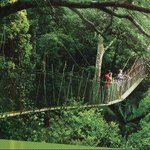 Taman Negara Day Tour - Day Tours