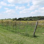 Delavan, Staller Estate Winery, Vineyard