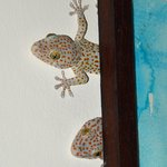 A pair of cheeky little geckos peek out from behind a painting.