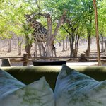 Foto Ongava Tented Camp